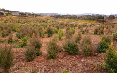What Rural Landscaping Has Done To Help Reduce Carbon Emissions